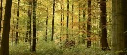 Investissements dans les forêts: un marché en pleine forme!